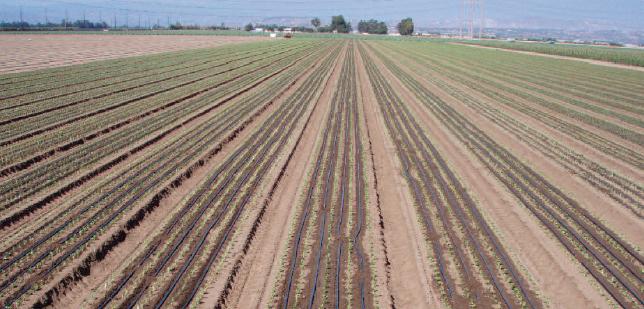 Ala gocciolante autocompensante multibar irritec 3 8 lt for Manichette per irrigazione prezzi