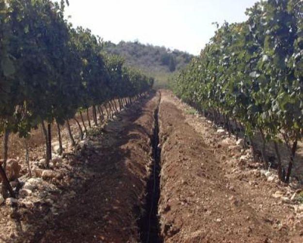 X irrigazione sub irrigazione for Irrigazione vigneto